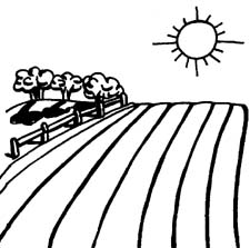 Farm Journal Crop Tour Results
